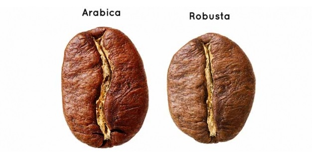 Differences between Arabica and Robusta coffee beans